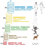 Niveles evolutivos de Consciencia Humana